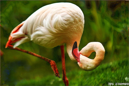 Contortioniste le flamand rose
